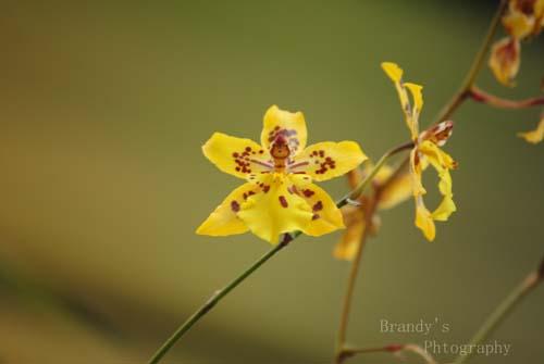 Flower at aGlance
