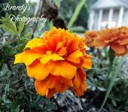 deeporangeflower