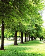 forestwalkway