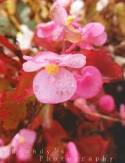 pinkishflowers