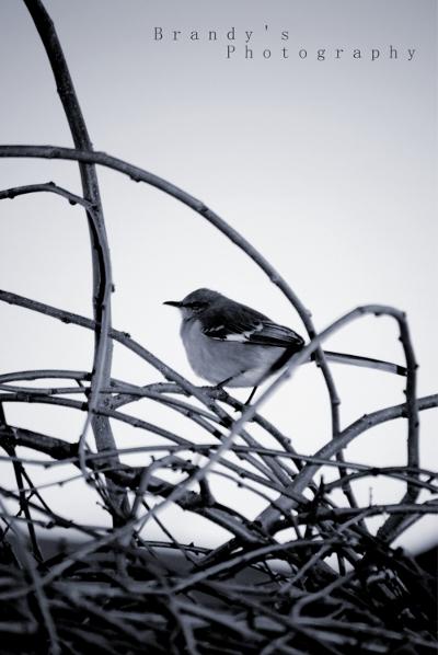 Tweetybird2