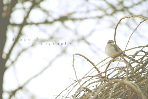 tweetybird3